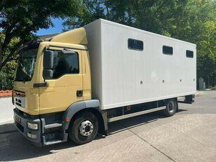 MAN Pferdetransporter hestetransporter lastbil